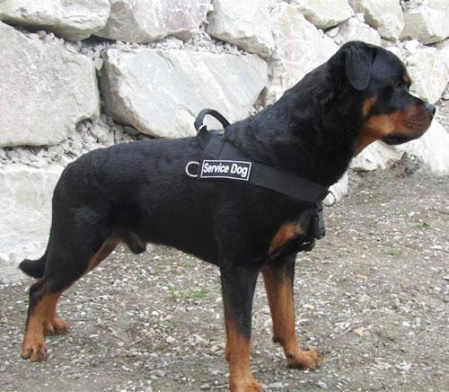 arnes perros policia